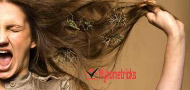 Reasons of dry hair