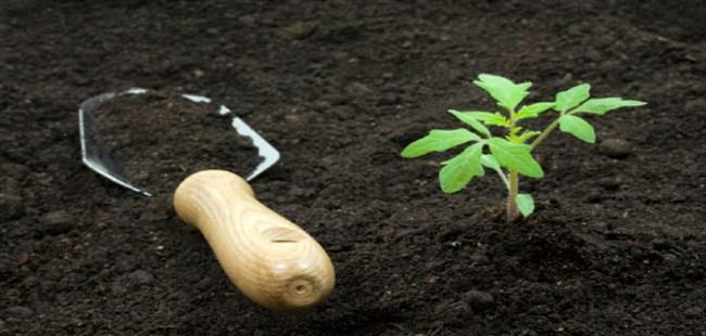 Healthy Garden Tips