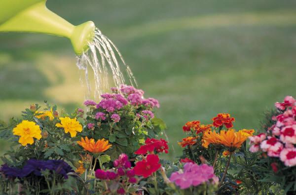 How to Feeding Plants